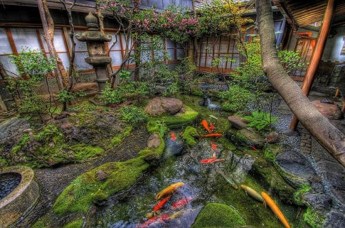 994 a beautiful koi pond has me swimming in smiles 1k for Koi pond japan