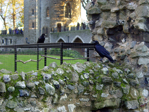 raven tower of london