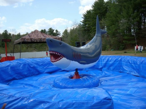 mechanical bull shark
