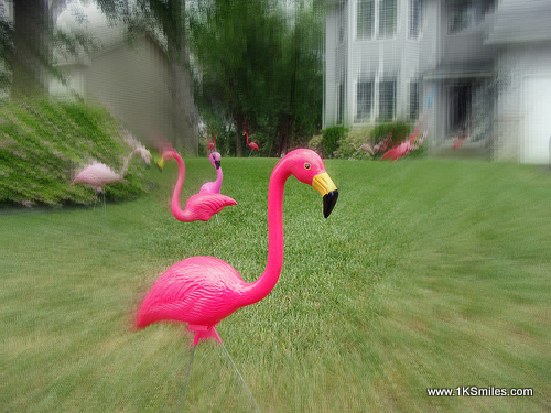 yard flamingos house