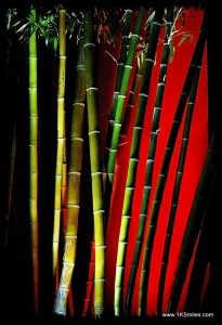 bamboo colorful