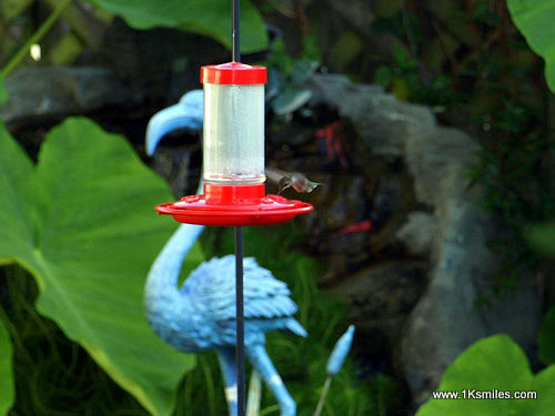 hummingbird feeder flamingo